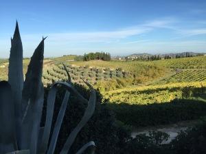 Mit uns gehen auch die Oliven. Erntevorbereitung am Tag der Abreise.